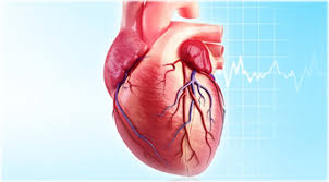 Heart Quiz: What Makes You Tick? Trivia